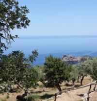 Paisatge amb oliveres i sa Foradada. Monestir de Miramar. Valldemossa, Mallorca. IRU, SL.